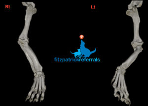 The 3D CT scan of Ted's legs showing how deformed the wrist and paw are relative to the elbow.