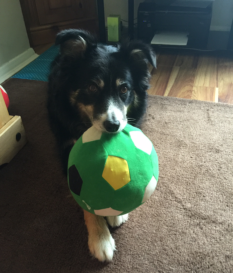 Izzy with ball - NOT Branded