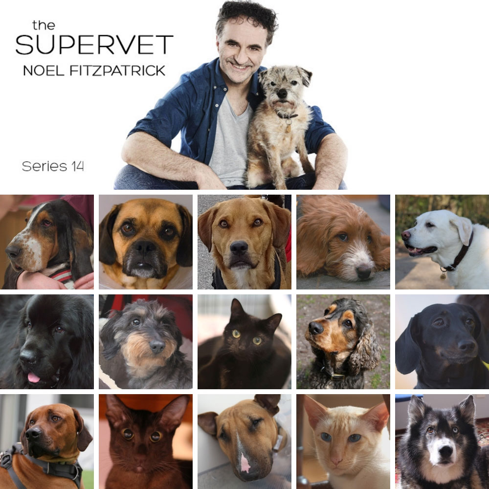 The Supervet Noel Fitzpatrick and patients from series 14