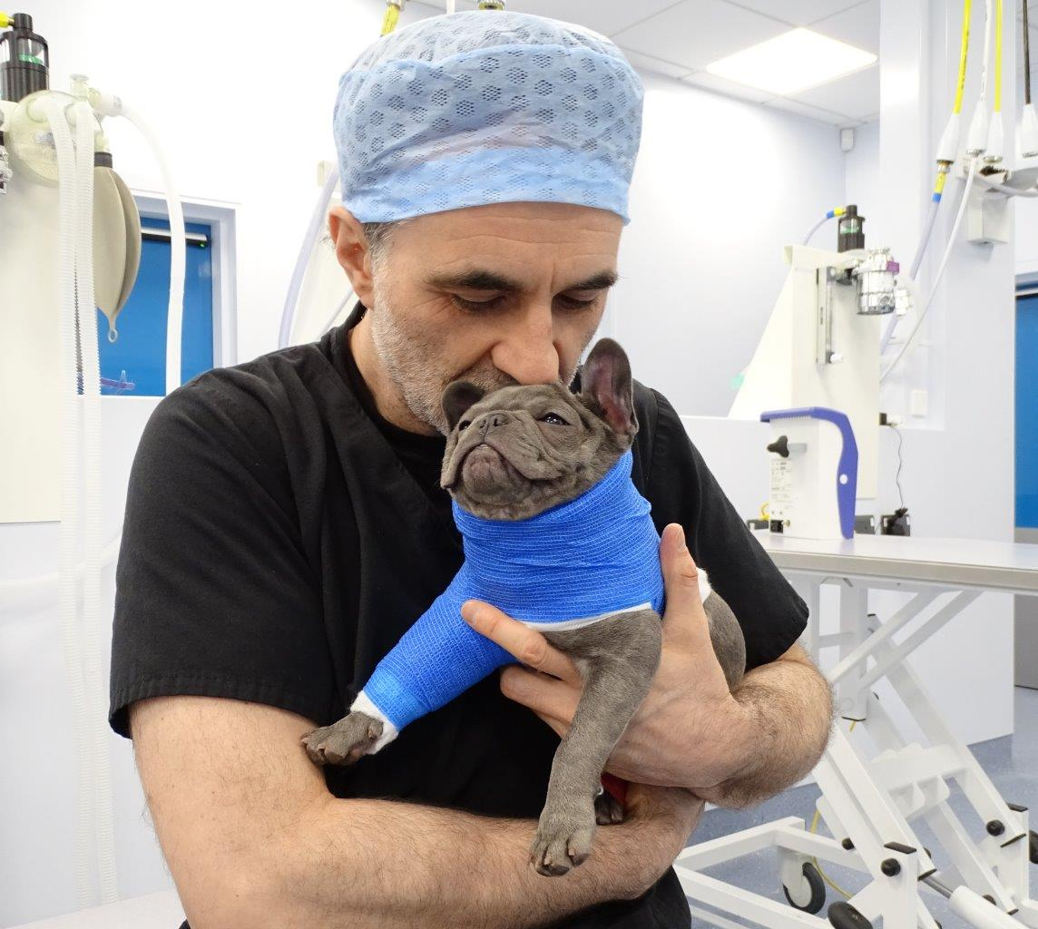 French Bulldog puppy with The Supervet, Noel Fitzpatrick